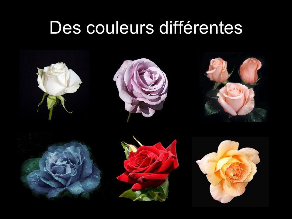 Des couleurs différentes