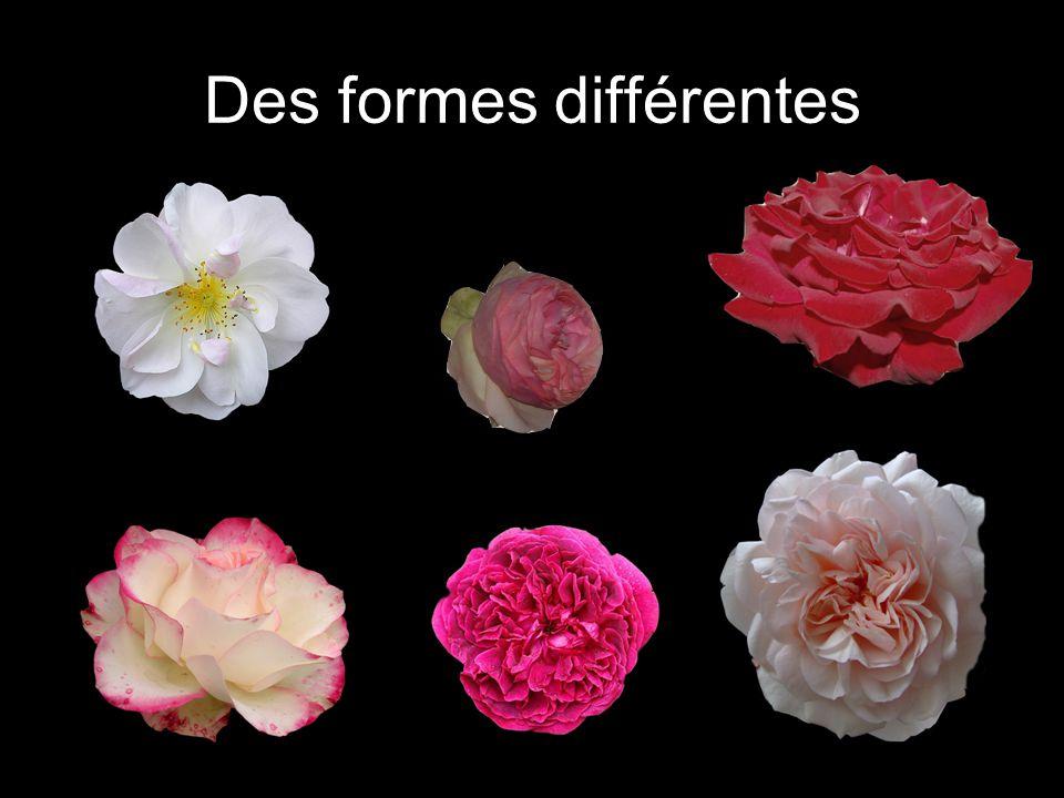 Des formes différentes