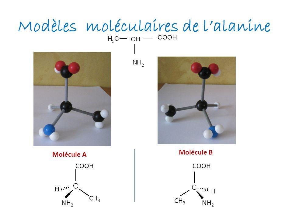 Modèles moléculaires de lalanine Molécule A Molécule B COOH H H CH 3 NH 2