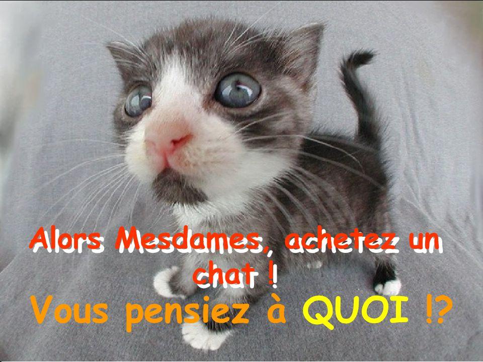 Alors Mesdames, achetez un chat ! Vous pensiez à QUOI !