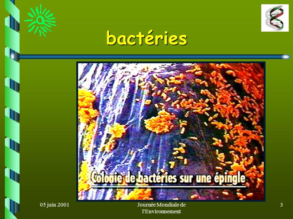 05 juin 2001Journée Mondiale de l'Environnement 2 Microorganismes ? Êtres vivants unicellulaires microscopiques Possèdent tout léquipement enzymatique