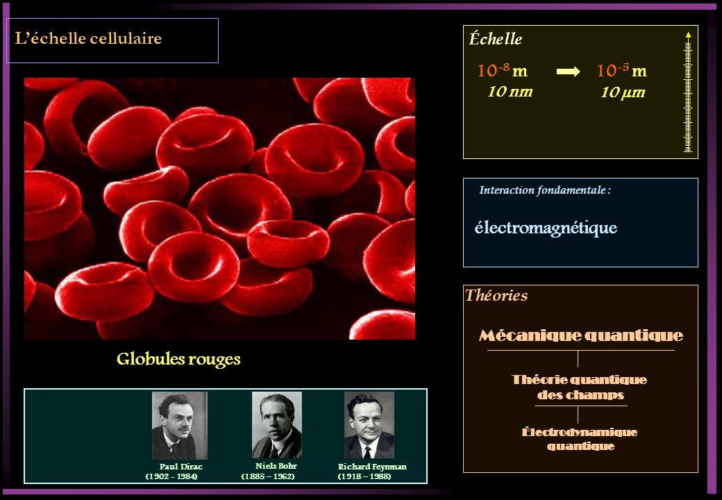 Échelle Interaction fondamentale : Théories Léchelle cellulaire Globules rouges 10 -8 m10 -5 m Théorie quantique des champs Mécanique quantique 10 µm 10 nm électromagnétique Électrodynamique quantique Paul Dirac (1902 - 1984) Niels Bohr (1885 – 1962) Richard Feynman (1918 – 1988)