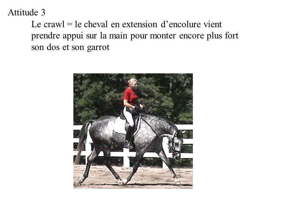 Le crawl = le cheval en extension dencolure vient prendre appui sur la main pour monter encore plus fort son dos et son garrot Attitude 3
