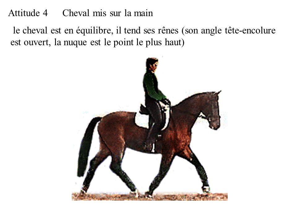 le cheval est en équilibre, il tend ses rênes (son angle tête-encolure est ouvert, la nuque est le point le plus haut) Attitude 4Cheval mis sur la main