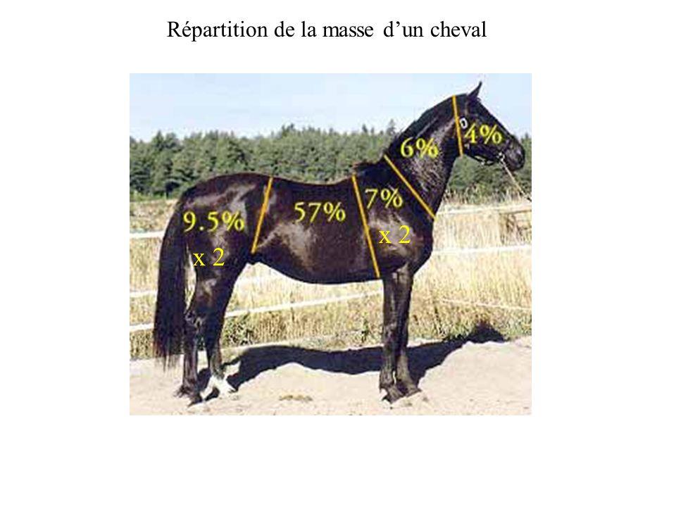 x 2 Répartition de la masse dun cheval