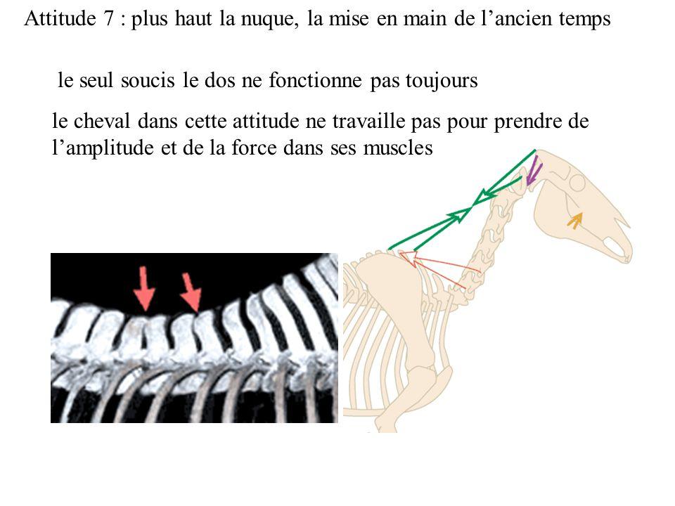 Attitude 7 : plus haut la nuque, la mise en main de lancien temps le seul soucis le dos ne fonctionne pas toujours le cheval dans cette attitude ne travaille pas pour prendre de lamplitude et de la force dans ses muscles