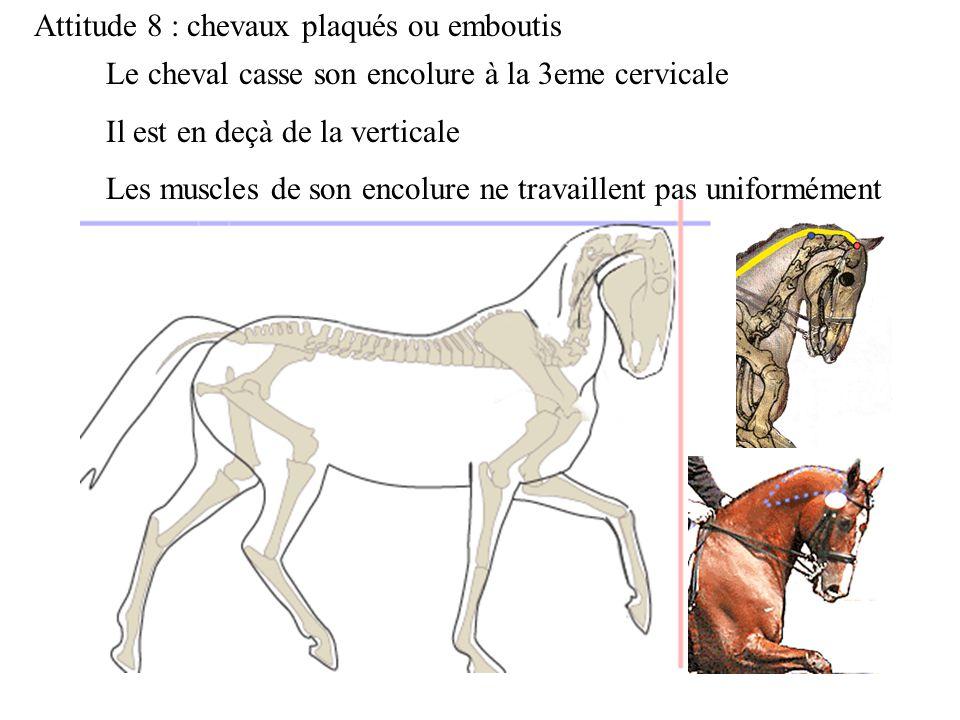 Attitude 8 : chevaux plaqués ou emboutis Le cheval casse son encolure à la 3eme cervicale Il est en deçà de la verticale Les muscles de son encolure n
