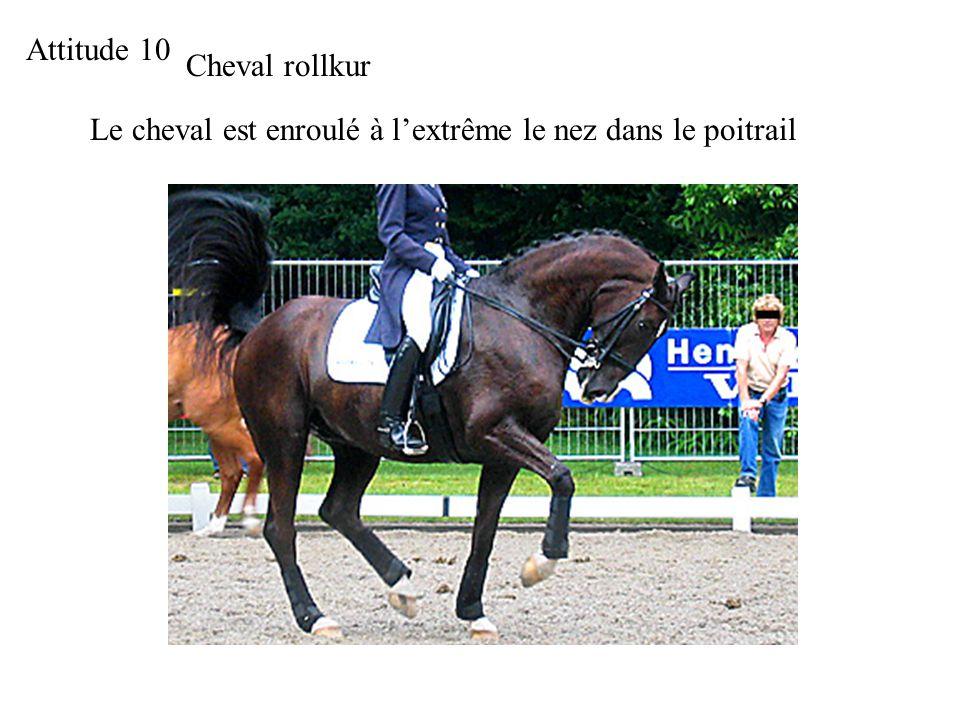 Attitude 10 Cheval rollkur Le cheval est enroulé à lextrême le nez dans le poitrail