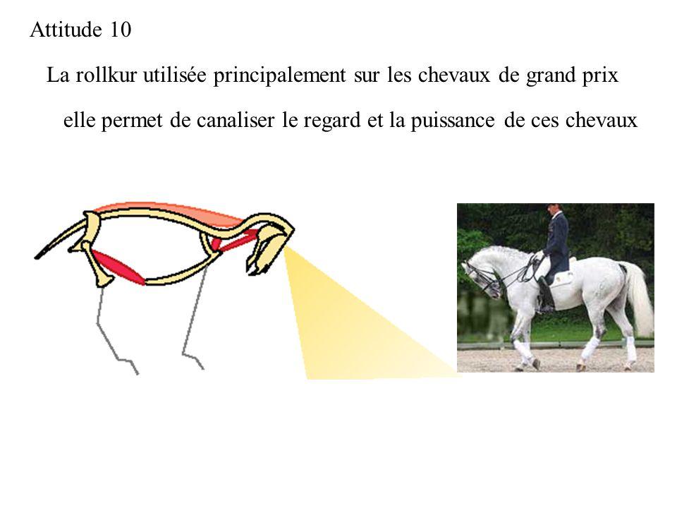 La rollkur utilisée principalement sur les chevaux de grand prix Attitude 10 elle permet de canaliser le regard et la puissance de ces chevaux