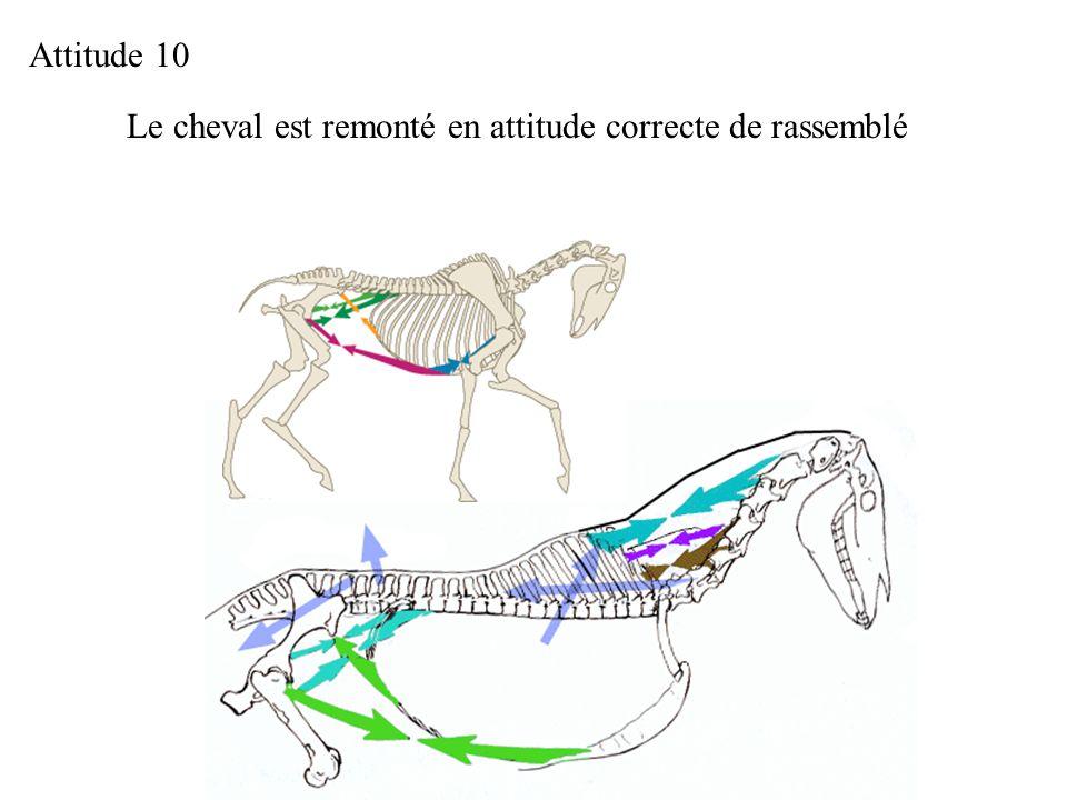 Le cheval est remonté en attitude correcte de rassemblé