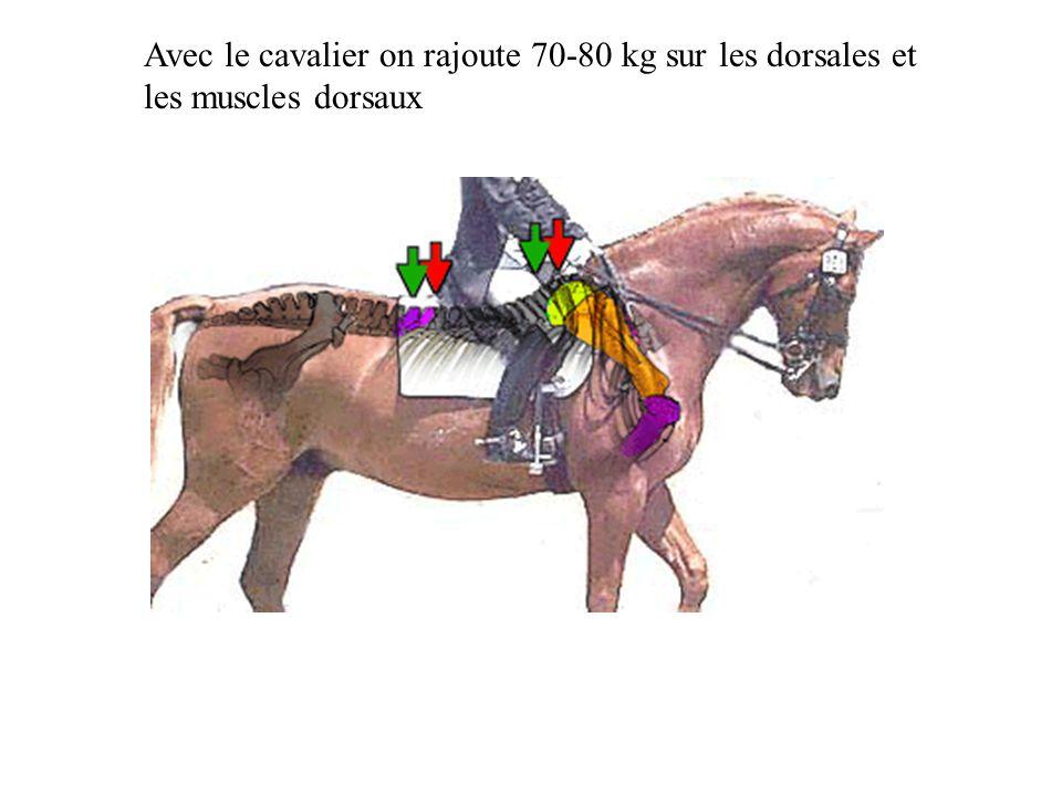 Avec le cavalier on rajoute 70-80 kg sur les dorsales et les muscles dorsaux
