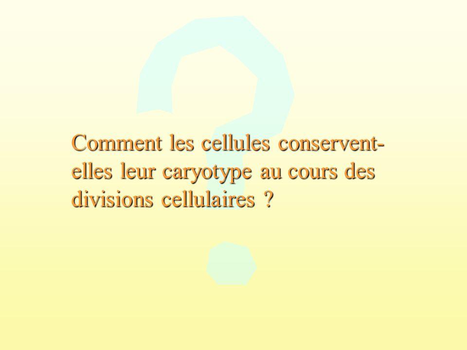 Comment les cellules conservent- elles leur caryotype au cours des divisions cellulaires ?