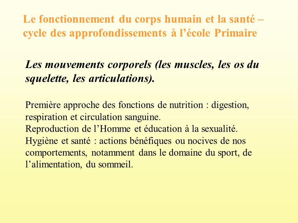 Le fonctionnement du corps humain et la santé – cycle des approfondissements à lécole Primaire Les mouvements corporels (les muscles, les os du squele