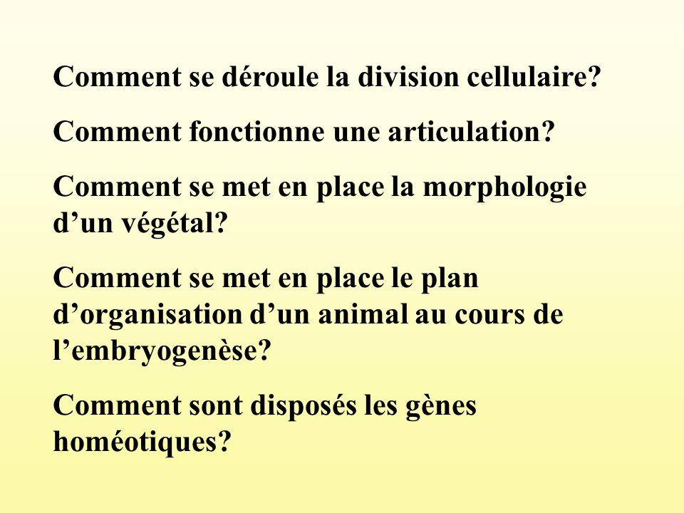 Comment se déroule la division cellulaire? Comment fonctionne une articulation? Comment se met en place la morphologie dun végétal? Comment se met en
