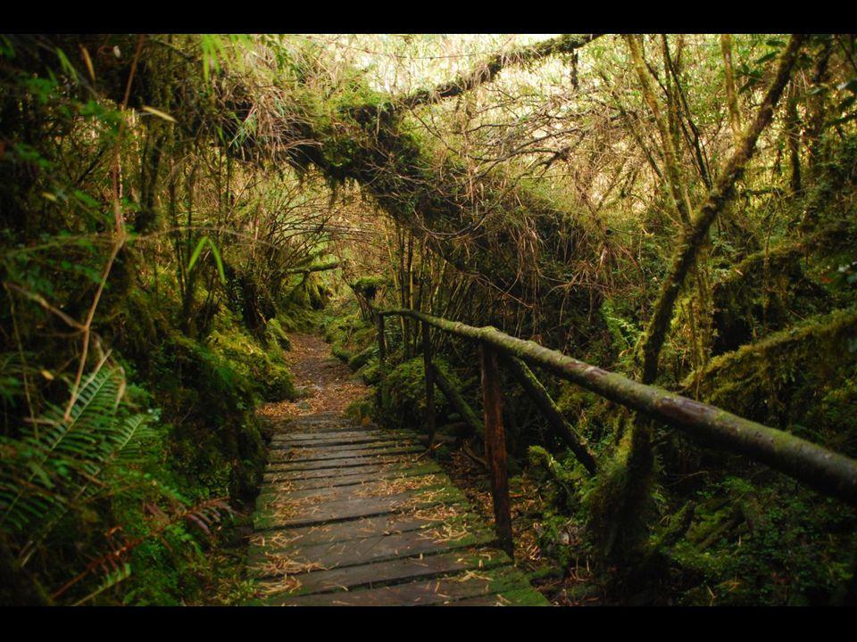 Le voyage dans le Parc Queulat nous force à voyager dans la jungle typique de la Patagonie:un paysage qui semble venir du monde de la magie.