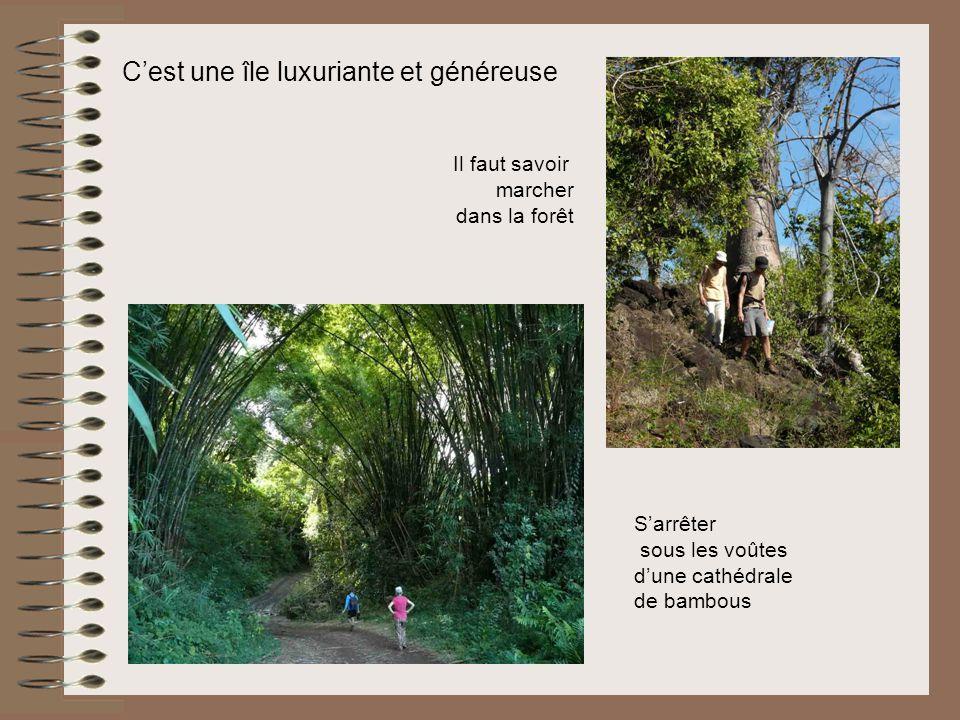 Cest une île luxuriante et généreuse Il faut savoir marcher dans la forêt Sarrêter sous les voûtes dune cathédrale de bambous