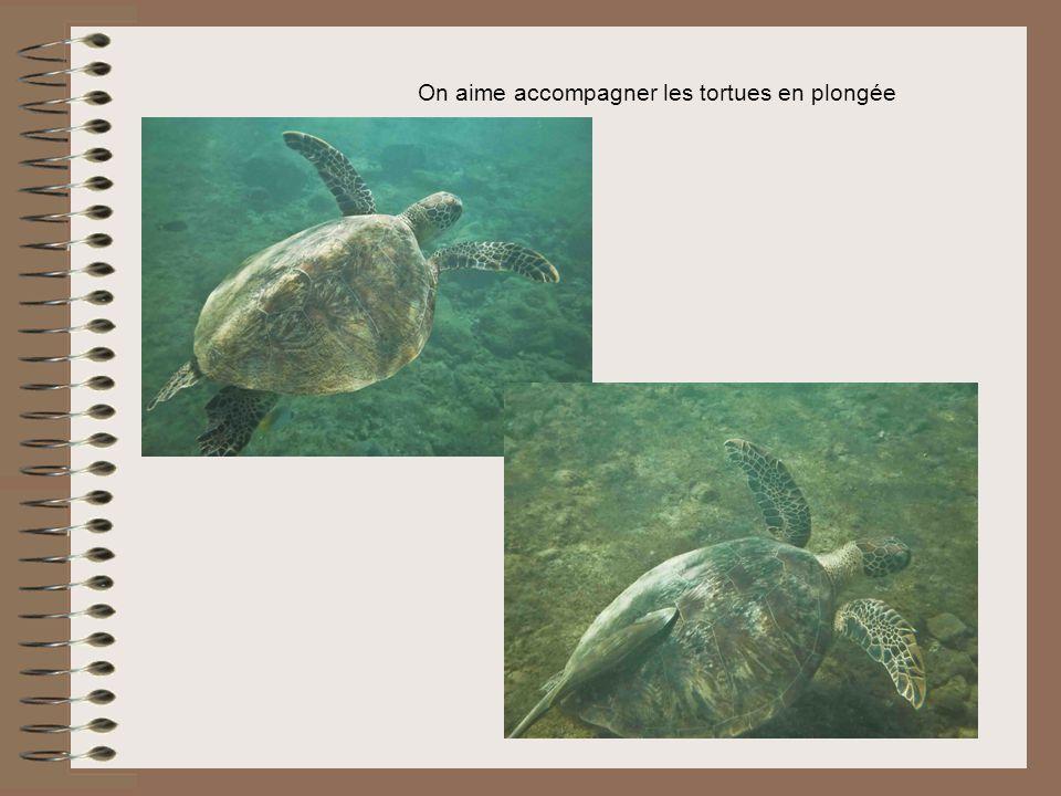 On aime accompagner les tortues en plongée