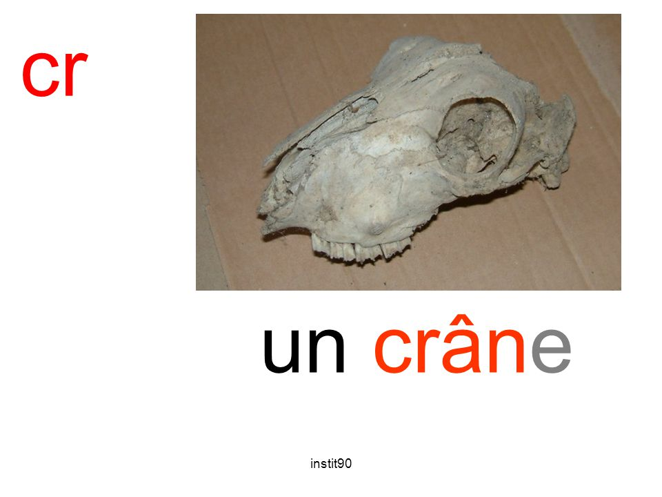 instit90 cr crâne un crâne