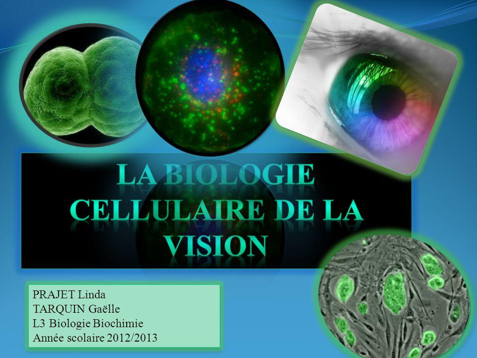 PRAJET Linda TARQUIN Gaëlle L3 Biologie Biochimie Année scolaire 2012/2013 PRAJET Linda TARQUIN Gaëlle L3 Biologie Biochimie Année scolaire 2012/2013