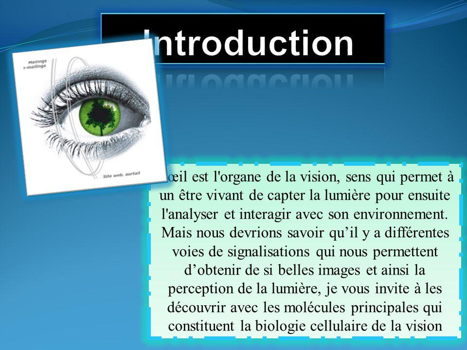 L'œil est l'organe de la vision, sens qui permet à un être vivant de capter la lumière pour ensuite l'analyser et interagir avec son environnement. Ma