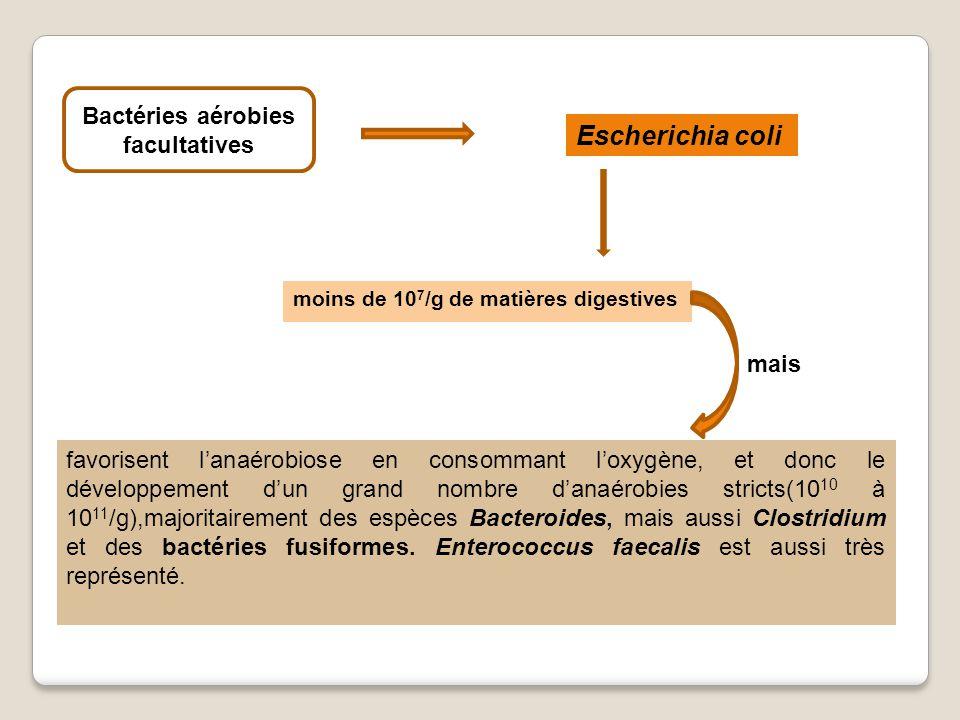 favorisent lanaérobiose en consommant loxygène, et donc le développement dun grand nombre danaérobies stricts(10 10 à 10 11 /g),majoritairement des espèces Bacteroides, mais aussi Clostridium et des bactéries fusiformes.