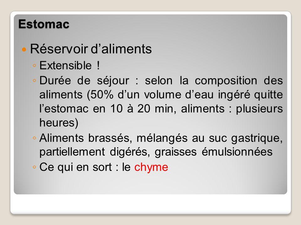 Estomac Réservoir daliments Extensible ! Durée de séjour : selon la composition des aliments (50% dun volume deau ingéré quitte lestomac en 10 à 20 mi