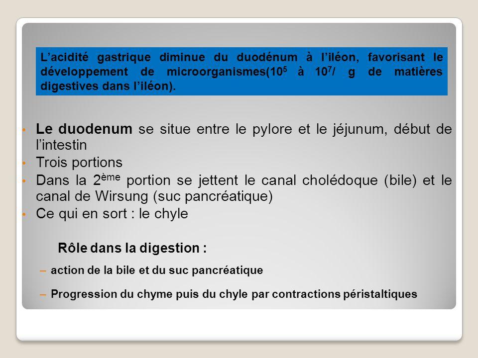 Lacidité gastrique diminue du duodénum à liléon, favorisant le développement de microorganismes(10 5 à 10 7 / g de matières digestives dans liléon).