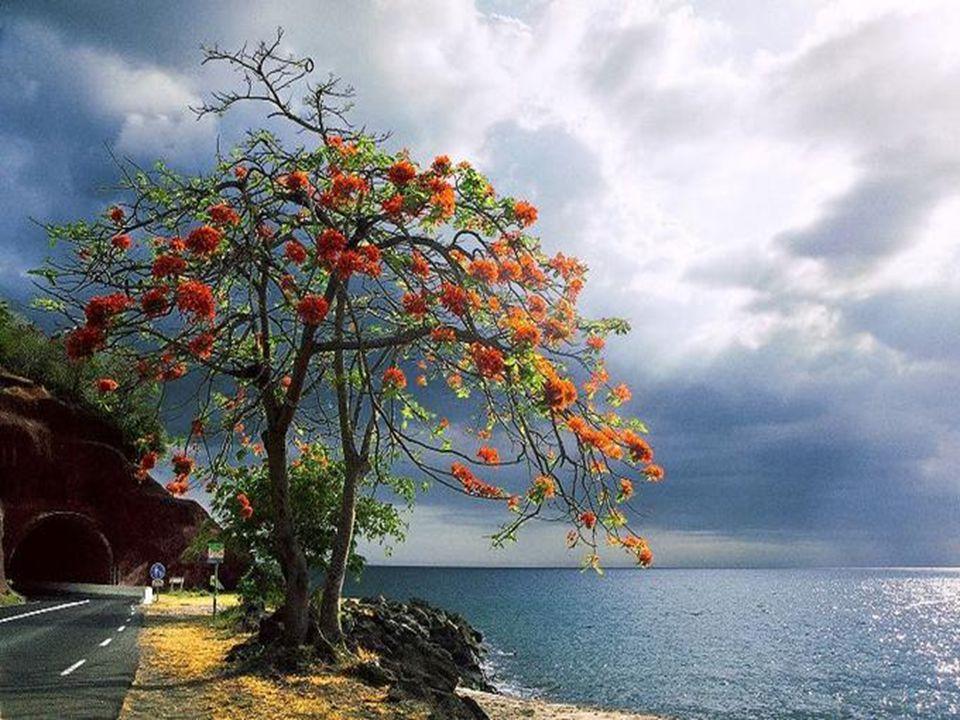 .. Y a toujours Le jour après la nuit Y a toujours Une fleur dans la nuit
