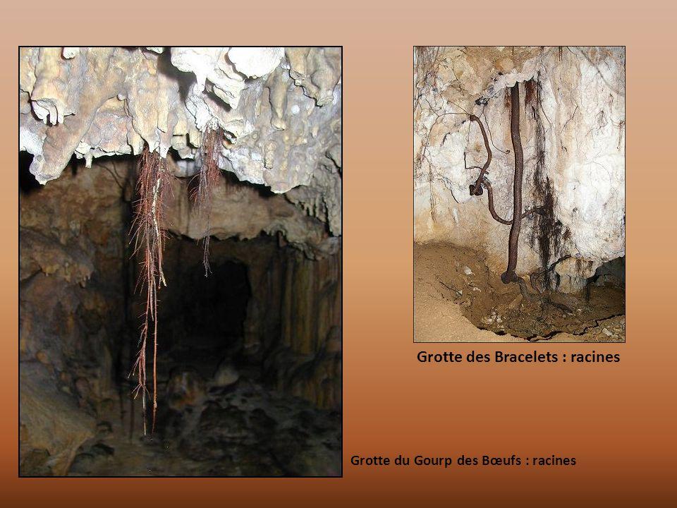 Grotte du Gourp des Bœufs : racines Grotte des Bracelets : racines