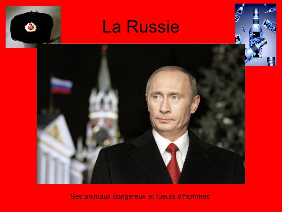 La Russie Ses animaux dangereux et tueurs dhommes