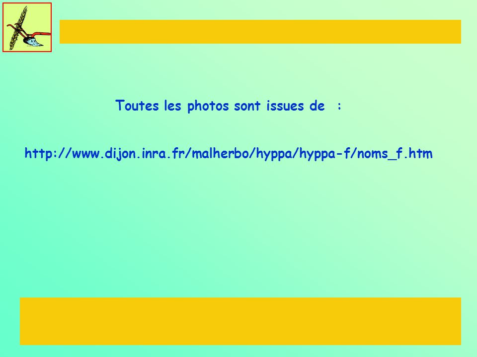 Toutes les photos sont issues de : http://www.dijon.inra.fr/malherbo/hyppa/hyppa-f/noms_f.htm