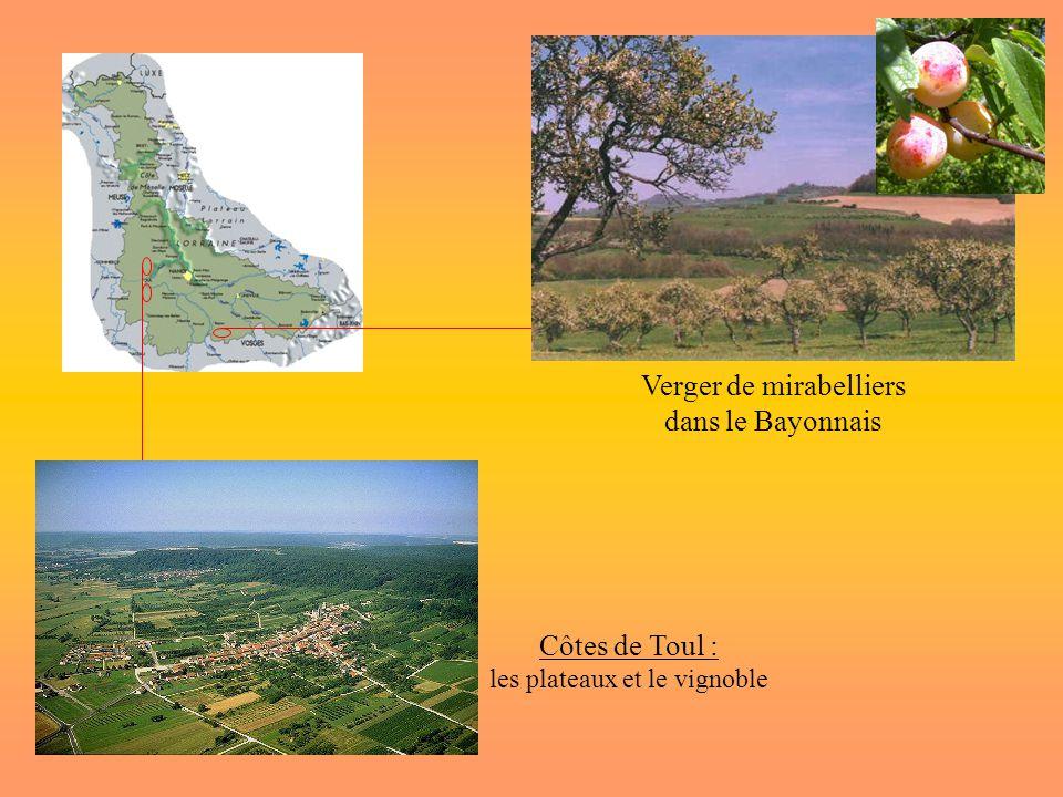 Côtes de Toul : les plateaux et le vignoble Verger de mirabelliers dans le Bayonnais