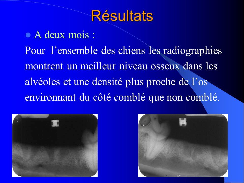 Résultats A deux mois : Pour lensemble des chiens les radiographies montrent un meilleur niveau osseux dans les alvéoles et une densité plus proche de