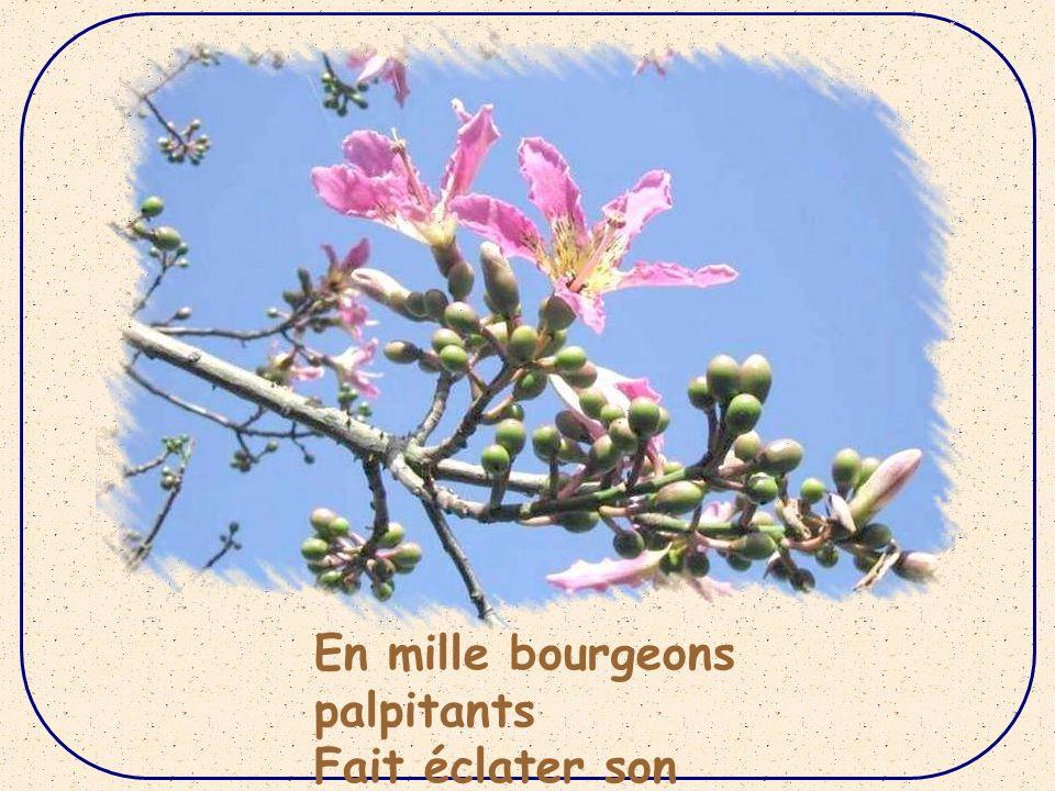 Dans la nature, le printemps, Sur le doux sol de notre France