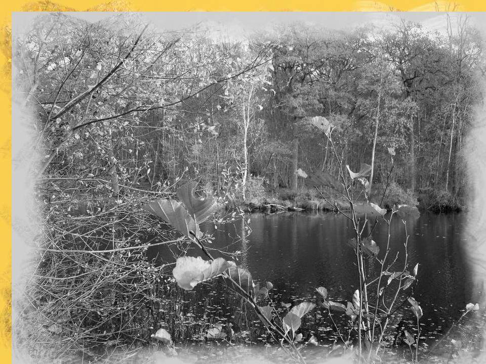 L'envol lourd des canards glissant sous les roseaux Raye un instant le calme et le reflet des eaux. Puis tout devient silence, étrange, nostalgique, N