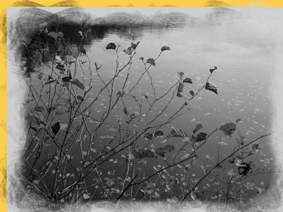 La hulotte se tait ; l'aube étire en fumée Les volutes des eaux qu'enchâsse la ramée où s'élève bientôt le grand hymne d'éveil Lorsque l'étang s'irise