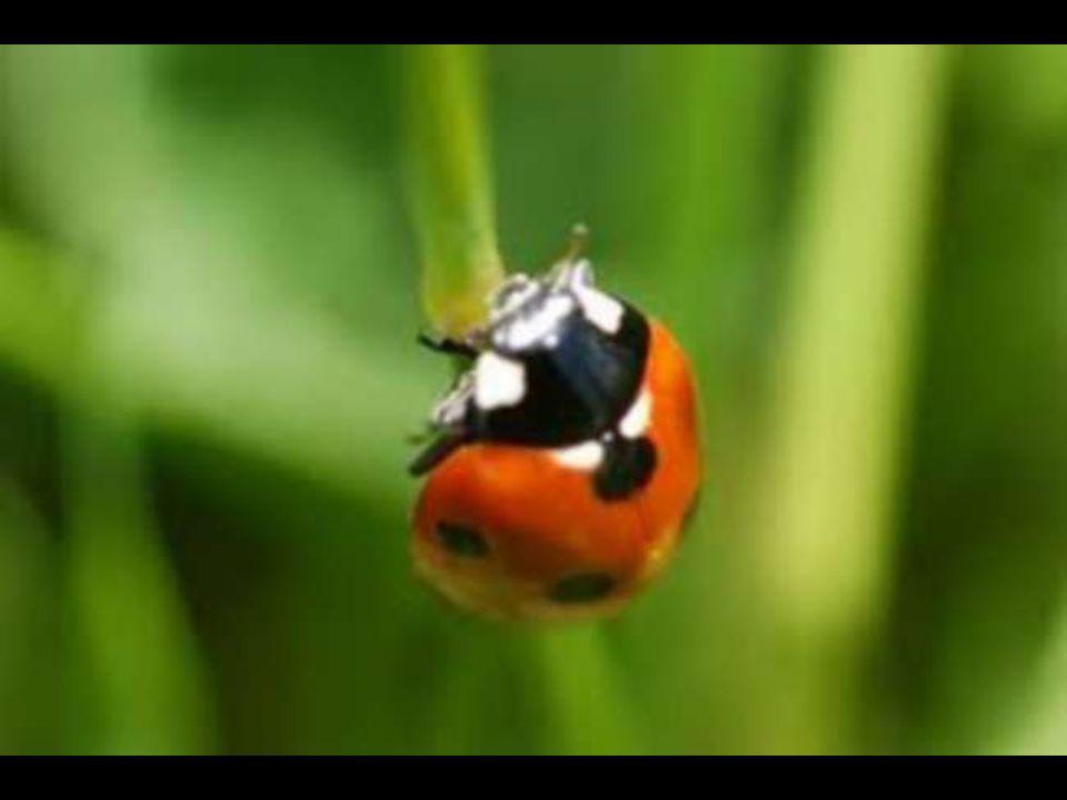 Cher petit insecte, Avec amour je te protège et te respecte.