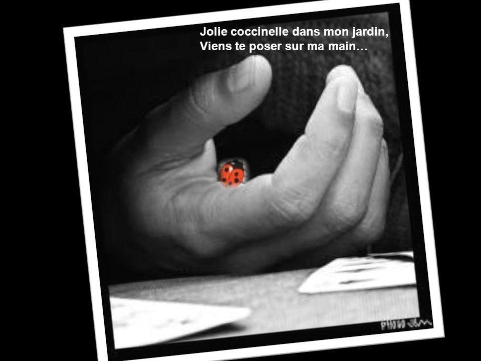 Jolie coccinelle dans mon jardin, Viens te poser sur ma main… Jolie coccinelle dans mon jardin, Viens te poser sur ma main…