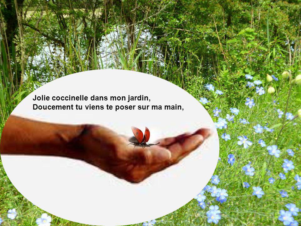 Jolie coccinelle dans mon jardin, Doucement tu viens te poser sur ma main,