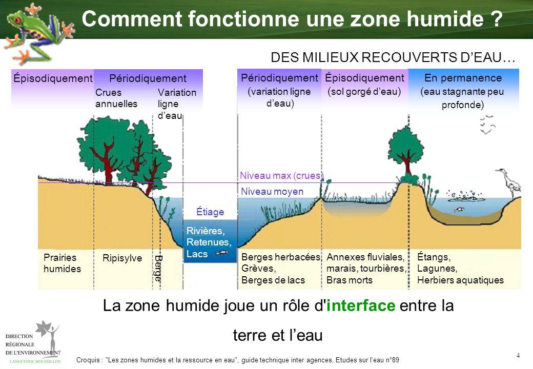 4 Rivières, Retenues, Lacs La zone humide joue un rôle d'interface entre la terre et leau Croquis :