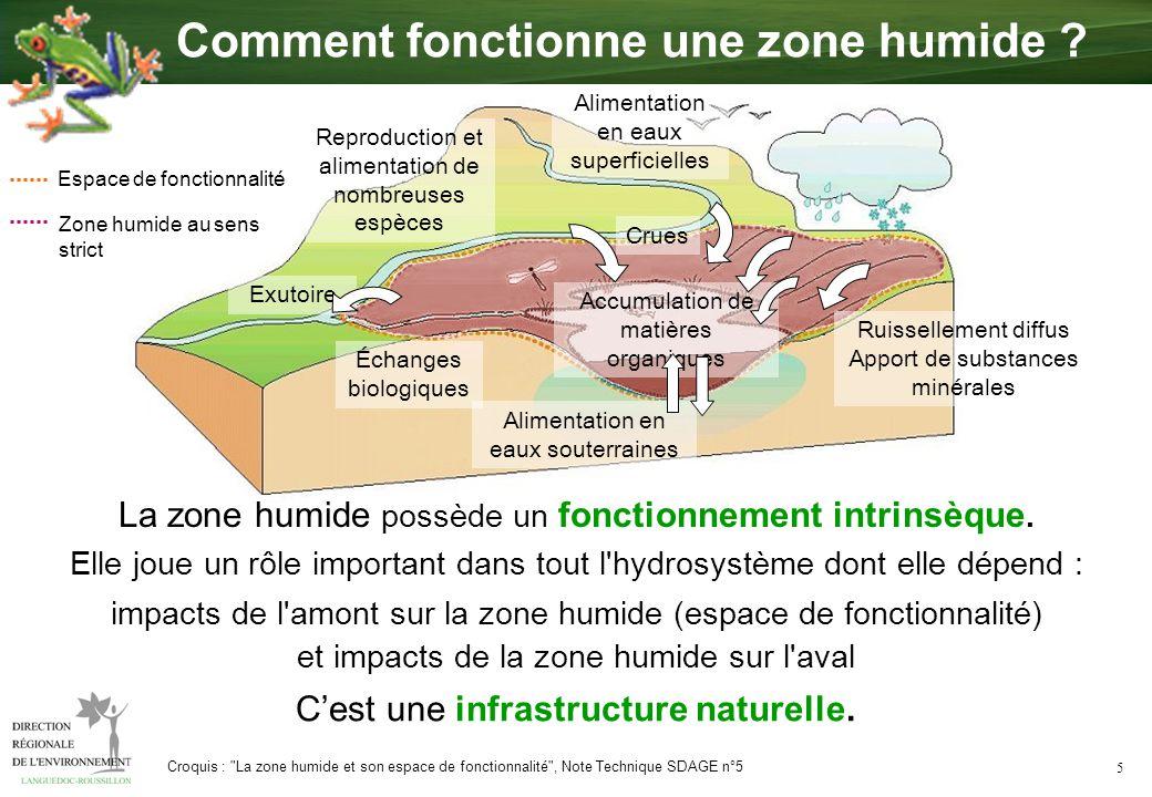5 Cest une infrastructure naturelle. La zone humide possède un fonctionnement intrinsèque. Elle joue un rôle important dans tout l'hydrosystème dont e