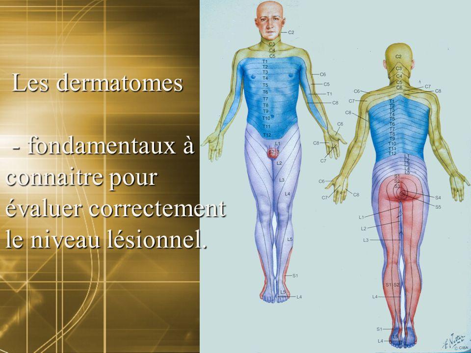 Les dermatomes Les dermatomes - fondamentaux à - fondamentaux à connaitre pour évaluer correctement le niveau lésionnel.