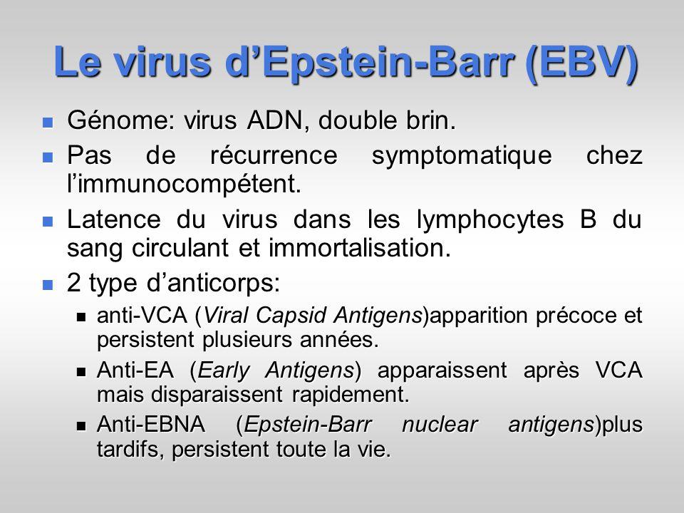 Le virus dEpstein-Barr (EBV) Génome: virus ADN, double brin.