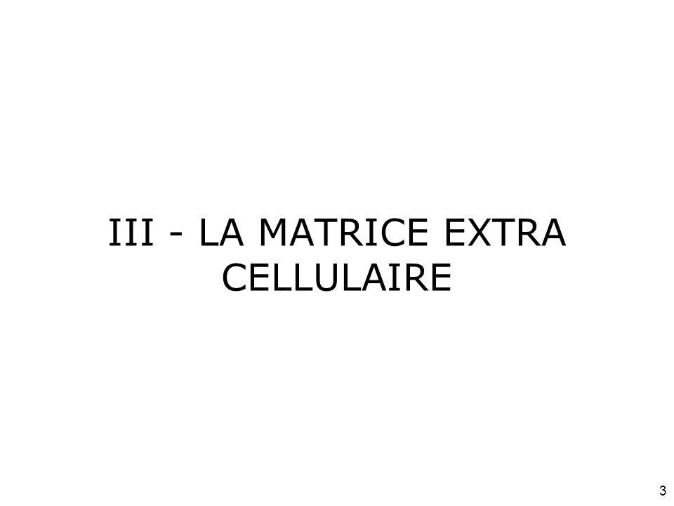 24 Acide hyaluronique (3 de 3) Réparation des plaies Lubrifiant dans la synoviale Interactions très importantes avec les autres molécules de la matrice extra-cellulaire –Protéines –Protéoglycannes