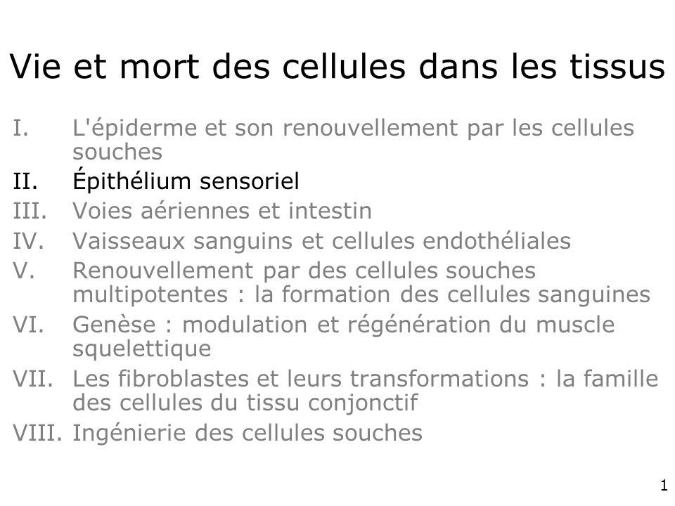 1 Vie et mort des cellules dans les tissus I.L épiderme et son renouvellement par les cellules souches II.Épithélium sensoriel III.Voies aériennes et intestin IV.Vaisseaux sanguins et cellules endothéliales V.Renouvellement par des cellules souches multipotentes : la formation des cellules sanguines VI.Genèse : modulation et régénération du muscle squelettique VII.Les fibroblastes et leurs transformations : la famille des cellules du tissu conjonctif VIII.Ingénierie des cellules souches
