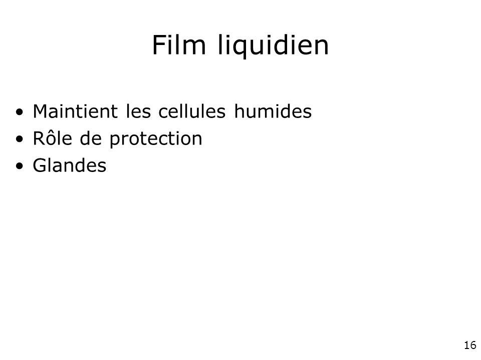 16 Film liquidien Maintient les cellules humides Rôle de protection Glandes