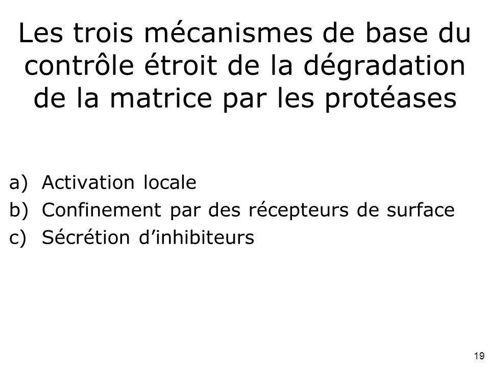 19 Les trois mécanismes de base du contrôle étroit de la dégradation de la matrice par les protéases a)Activation locale b)Confinement par des récepte