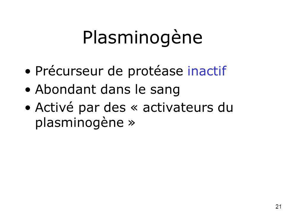 21 Plasminogène Précurseur de protéase inactif Abondant dans le sang Activé par des « activateurs du plasminogène »