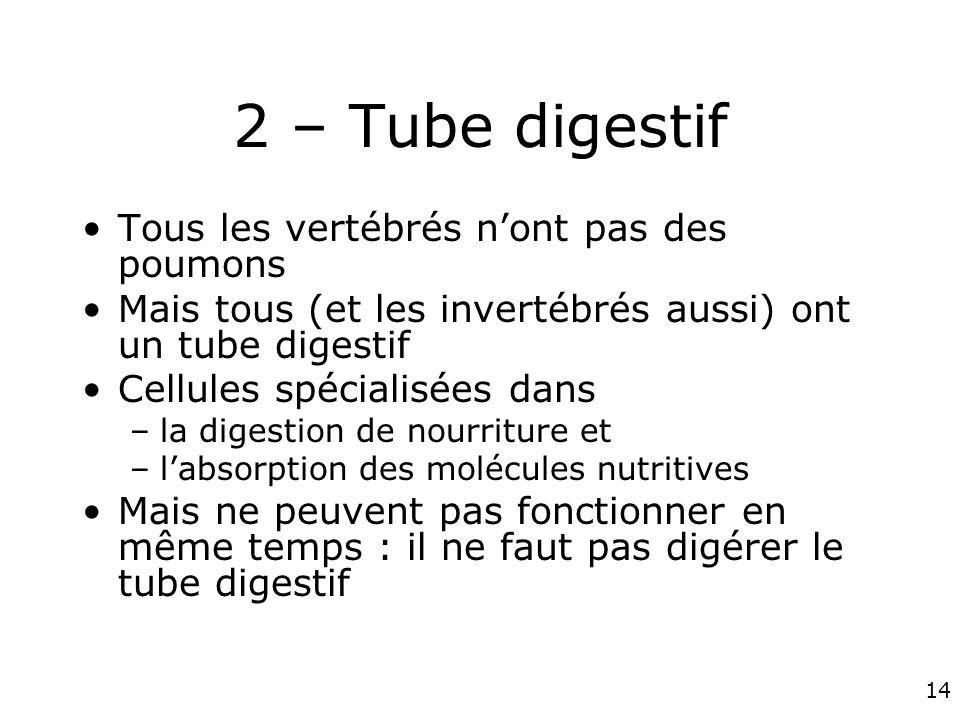 14 2 – Tube digestif Tous les vertébrés nont pas des poumons Mais tous (et les invertébrés aussi) ont un tube digestif Cellules spécialisées dans –la