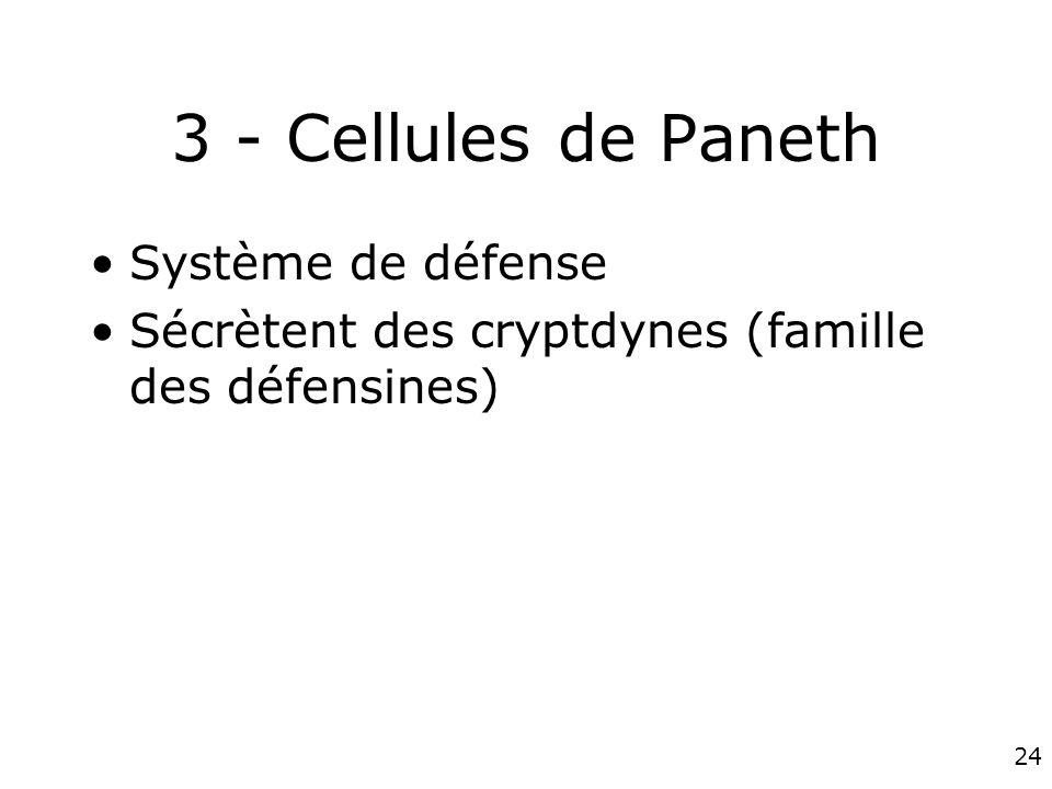 24 3 - Cellules de Paneth Système de défense Sécrètent des cryptdynes (famille des défensines)